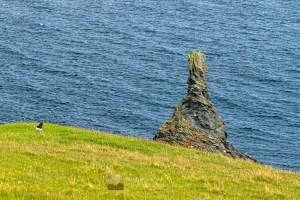 Oyster Catcher & Twisted Stack, Fethaland, Shetland