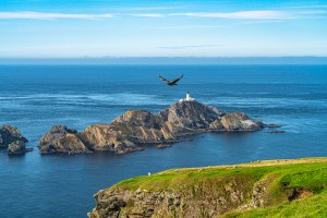 Bonxie Over Muckle Flugga, Shetland